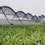 BCR: La producción agroindustrial del país creció 24.3% en abril último