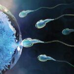 Los óvulos frescos o congelados de una misma mujer son igual de fértiles