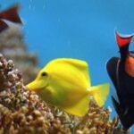 Demuestran que los peces pueden oler los virus para evitar infecciones