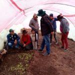 Ayacucho: con fitotoldos agricultores protegerán cultivos susceptibles