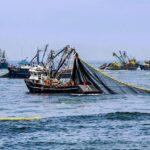Pesca: Desembarques crecieron más de 138% en julio de 2019