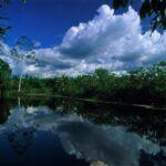 Fortalecerán sostenibilidad ambiental de bosques de la Amazonía