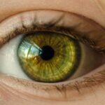 Descodifican mecanismos genéticos del sistema visual
