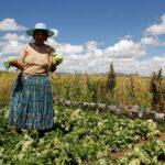 Sierra y Selva Exportadora promueve formación de inspectores internos