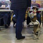 Un perro se comió el DNI del presidente de mesa en elecciones de España