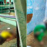 Honduras: 18 muertos deja sangriento motín en una cárcel