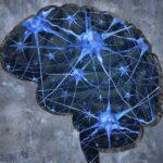 Descubren que proteína revierte patologías asociadas al Alzheimer