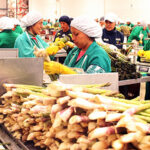 Exportación de frutas y hortalizas superó US$ 4.900 millones