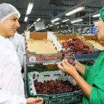 Ministra Cáceres: Para Gobierno primero es proteger la vida y salud de los trabajadores