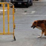 Animales en calles de Lima durante primer día de inmovilización total (FOTOS)