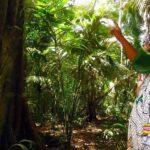 Deforestación en Amazonía peruana se redujo 28 % durante cuarentena