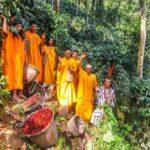 Comunidades nativas conservaron casi 3 millones de hectáreas de bosques comunales