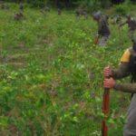 Cultivos de coca: Perú advierte 'serios errores' en cálculo de EEUU