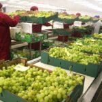 Ventas de frutas peruanas al mundo cerrarán este año en US$ 3.740 millones