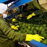 Exportaciones no tradicionales del Perú crecieron 6.2% en setiembre