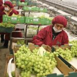 Nueva Ley de Promoción Agraria contendrá mejoras en el aspecto laboral