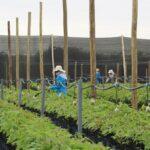 Ley de Promoción Agraria: Poder Ejecutivo promulga derogatoria