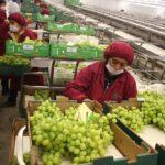 Ejecutivo publica reglamento de la ley del nuevo régimen laboral agrario