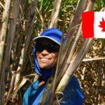 Canadá dará residencia a trabajadores esenciales y estudiantes internacionales