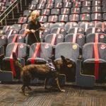 """Covid-19: Perros detectores """"certificados"""" debutarán en feria de Miami"""