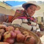 """Bolivia: Las papas """"inteligentes"""" clave de la producción ante el cambio climático"""